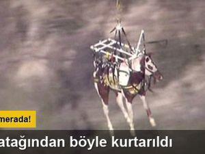 At, dere yatağından helikopterle kurtarıldı
