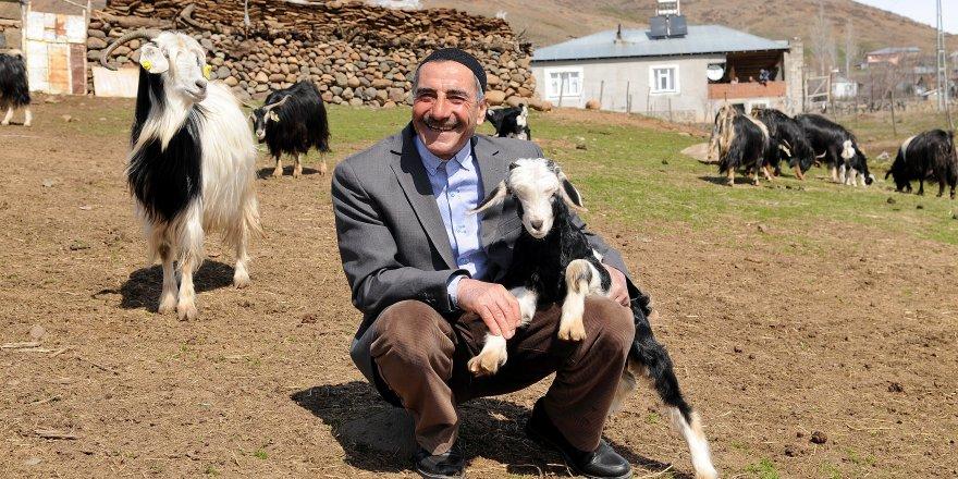 Bingöllü çobana 'koyunlarla imtihanı' ün getirdi