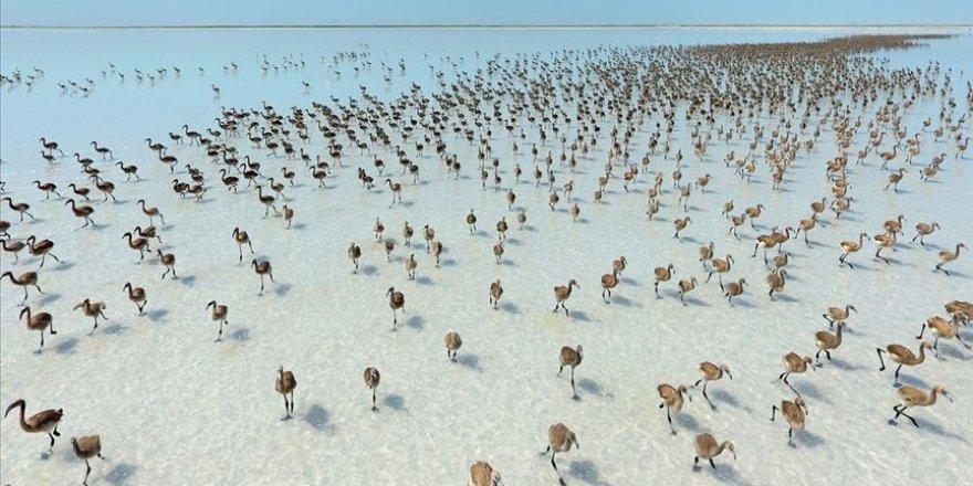 Tuz Gölü flamingolarla bir başka güzel