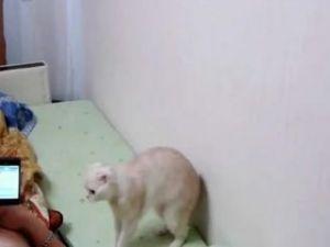 Rusya Milli Marşı'nda hazırola geçen kedi
